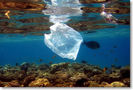 non compostable bags end up in the ocean